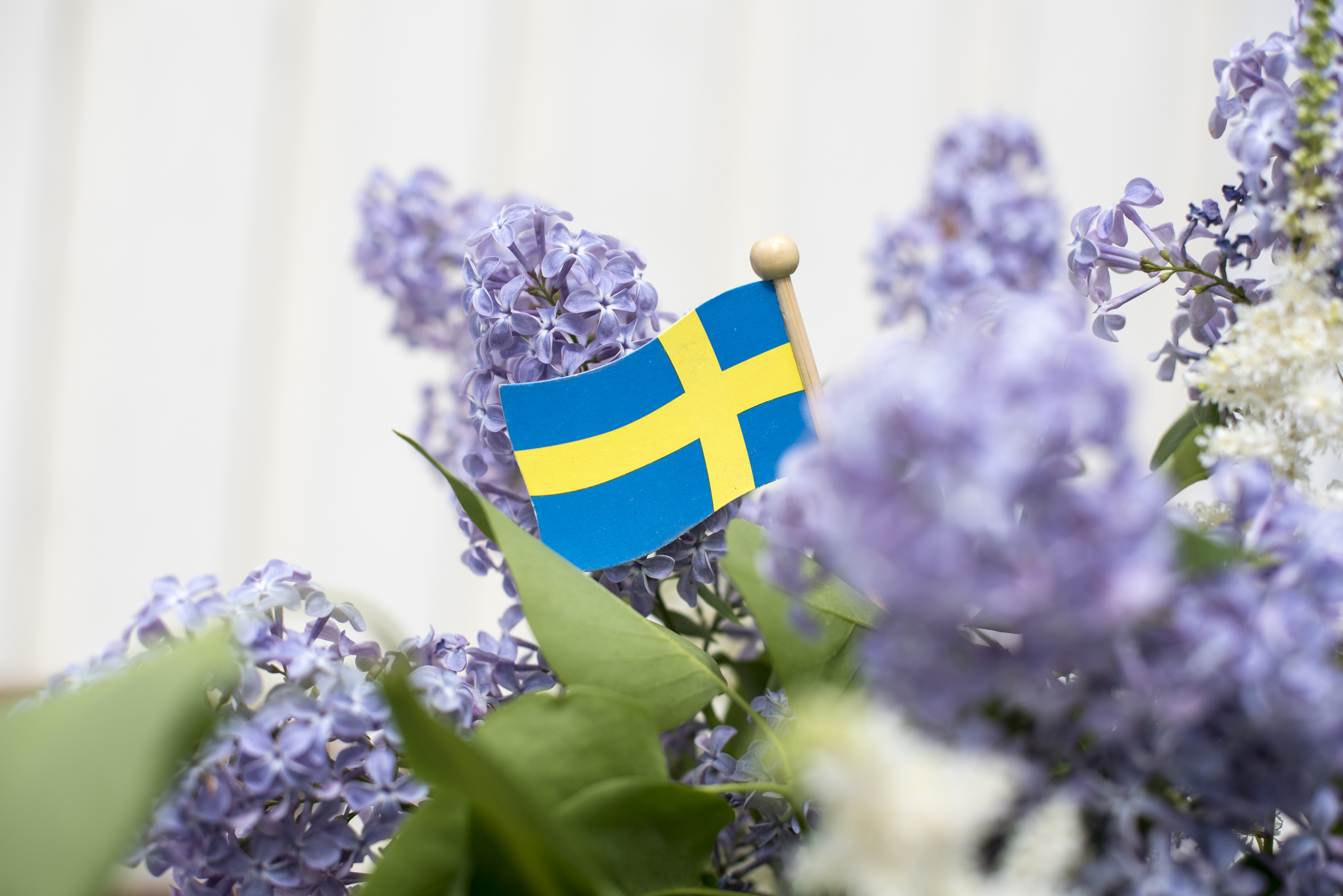 Lila syrener och en svensk liten träflagga